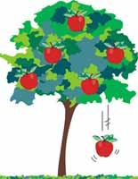 Las mujeres son como manzanas en los árboles